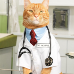 5 Reasons Why Your Cat Will Make You Live Longer