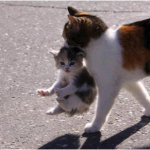 5 Kitty Moms Who Deserve Something Special for Mother's Day
